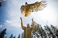 JEROME A. POLLOS/Press..Steve Hamman releases a red-tailed hawk Friday on Potlatch Hill in Coeur d'Alene following its three-month treatment for an injured shoulder. Birds of Prey Northwest released three raptors back into the wild following rehabilitation for various injuries.