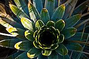 Santana do Riacho_MG, Brasil...Detalhe da bromelia do Alto Palacio no Parque Nacional da Serra do Cipo...Detail of bromeliad in Alto Palacio in the Serra do Cipo National Park...Foto: JOAO MARCOS ROSA / NITRO