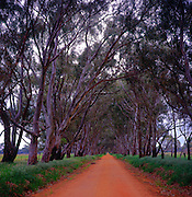 Red soil rural road lined by gum trees in rural Victoria, Australia