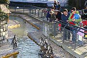 Mannheim. 16.02.17 | BILD- ID 042 |<br /> Luisenpark. Der aus dem Mannheimer Luisenpark verschwundene Pinguin ist tot. Das meldet die Polizei. Am Donnerstagmorgen gegen 8.30 Uhr habe ein Zeuge ihn am Rande eines Parkplatzes in der Museumstraße in der Mannheimer Oststadt gefunden. Anhand der Flügelmarke konnte das Tier identifiziert werden. Noch sei unklar, ob der Täter es dort tot abgelegt habe, oder ob es zu diesem Zeitpunkt noch lebte. Der Pinguin sei zwar ohne Kopf aufgefunden worden, aber die Polizei schließt nicht aus, dass sich ein anderes Tier an ihm zu schaffen gemacht hat. Der leblose Körper werde im Chemischen und Veterinäruntersuchungsamt in Karlsruhe (CVUA) untersucht, die Staatsanwaltschaft habe ein Ermittlungsverfahren gegen unbekannt eingeleitet. Die Behörden schließen aus, dass der fünf Kilogramm schwere und bis zu 60 Zentimeter große Pinguin von einem Wildtier gerissen oder aus dem Gehege im Luisenpark entlaufen sein könnte.<br /> Bild: Markus Prosswitz 16FEB17 / masterpress (Bild ist honorarpflichtig - No Model Release!)