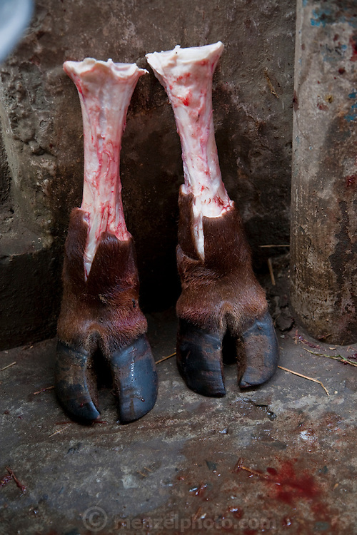 A butchered cow's legs are displayed on the street in Dhaka, Bangladesh. Bangladesh has  has the world's fourth largest Muslim population, and during the three days of Eid al-Adha, the Festival of Sacrifice, Dhaka's streets run red with the blood of thousands of butchered cattle. The feast comes at the conclusion of the Hajj, the annual Islamic pilgrimage to Mecca. In both the Koran and the Bible, God told the prophet Ibrahim (Abraham) to sacrifice his son to show supreme obedience to Allah (God). At the last moment, his son was spared and Ibrahim was allowed to sacrifice a ram instead. In Dhaka, as in the rest of the Muslim world, Eid al- Adha commemorates this tale, and the meat of the sacrificed animals is distributed to relatives, friends, and the poor.