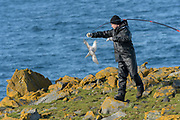 A&eth;alsteinn &Ouml;rn Sn&aelig;&thorn;&oacute;rsson with a<br /> a fulmar (Fulmarus glacialis) captured to replace its geolocator. Staff from N&aacute;tt&uacute;rustofa Nor&eth;austurlands (Northeast Iceland Nature Research Centre) catch seabirds at Skoruv&iacute;kurbjarg bird cliffs on Langanes Peninsula, Iceland to fit and replace geolocators to monitor the bird's movements.