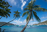 Palm trees overhang a port on the island of Bequia.