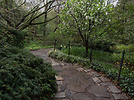 A path in Shakespeare Garden in central Park.
