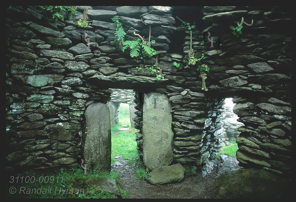 Circular foundations of two Fahan Group beehive huts sit in mist; Dingle Peninsula. Ireland