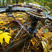 Single speed gearing and wheel with big leaf maples in Anacortes, Washington.