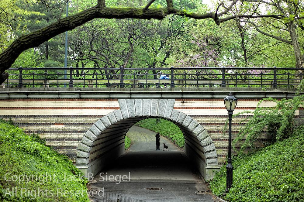 Bicycle, Bridge, Dog