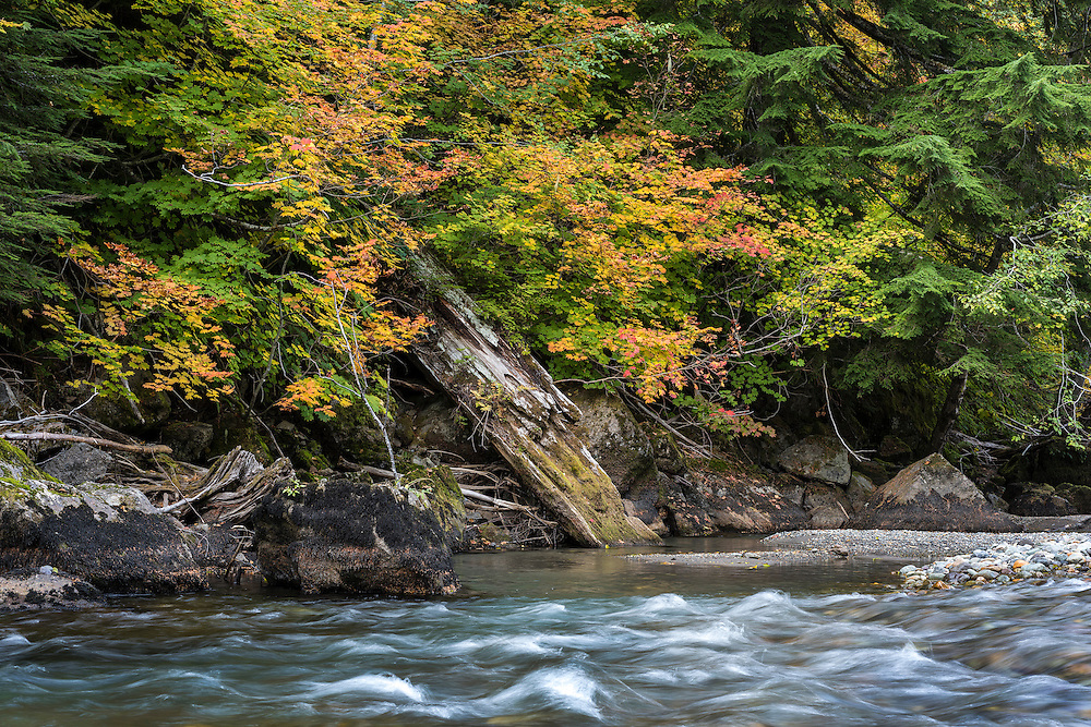 Downed tree in creek, Mt. Rainier National Park, Washington