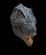 Reconstruction of the head of the Late Cretaceous dinosaur Tyrannosaurus rex