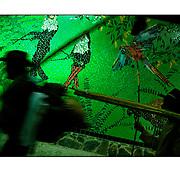 """Autor de la Obra: Aaron Sosa<br /> Título: """"Serie: Color Whispers""""<br /> Lugar: Palmeros de Chacao, Caracas - Venezuela<br /> Año de Creación: 2009<br /> Técnica: Captura digital en RAW impresa en papel 100% algodón Ilford Galeríe Prestige Silk 310gsm<br /> Medidas de la fotografía: 33,3 x 22,3 cms<br /> Medidas del soporte: 45 x 35 cms<br /> Observaciones: Cada obra esta debidamente firmada e identificada con """"grafito – material libre de acidez"""" en la parte posterior. Tanto en la fotografía como en el soporte. La fotografía se fijó al cartón con esquineros libres de ácido para así evitar usar algún pegamento contaminante.<br /> <br /> Precio: Consultar<br /> Envios a nivel nacional  e internacional."""