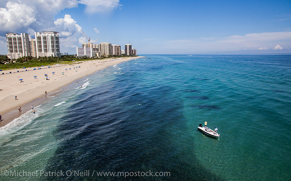 Aerial photograph of a school of Silver Mullet, Mugil curema, migrates past the Palm Beach, Florida, United States coastline during their annual migration. Fishermen target the schools to catch Tarpon, Jacks, Snooks and other predatory fish that follow the baitfish.