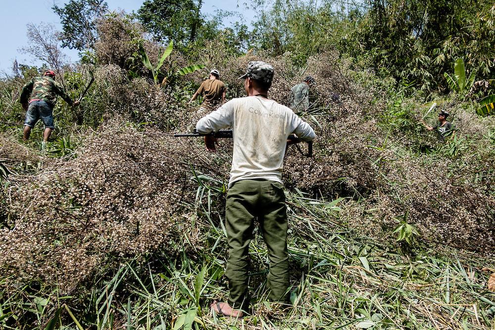 Kachin State. Work field nearby Laiza  Rehab Center.