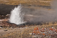 Artesia Geyser at Lower Geyser Basin.  Yellowstone National Park, Wyoming, USA.