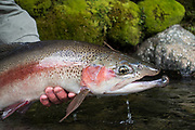 Rangitikei River Rainbow, NZ, Nov 2014 Day 4 of 5
