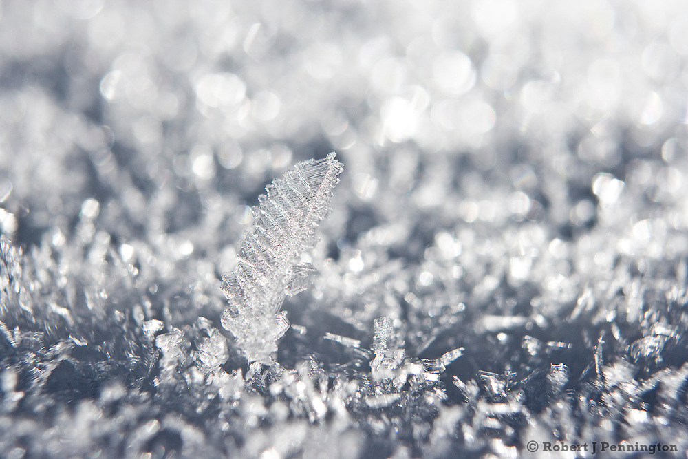 Cold clear winter nights in the Wasatch Mountains form a type of Hoar Frost called Surface Hoar that grows on fallen snow.