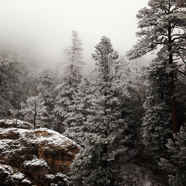 Snowfall. Tesuque, New Mexico.