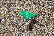 Plastic bottle discarded next to seaweed on Cley Beach, Norfolk, United Kingdom
