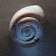 Shells 002
