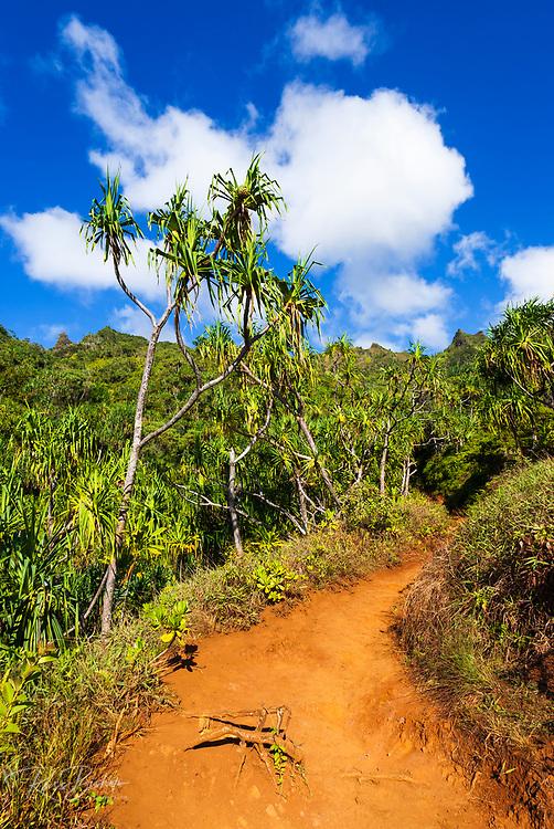 Lush vegitation along the Kalalau Trail on the Na Pali Coast, Island of Kauai, Hawaii USA