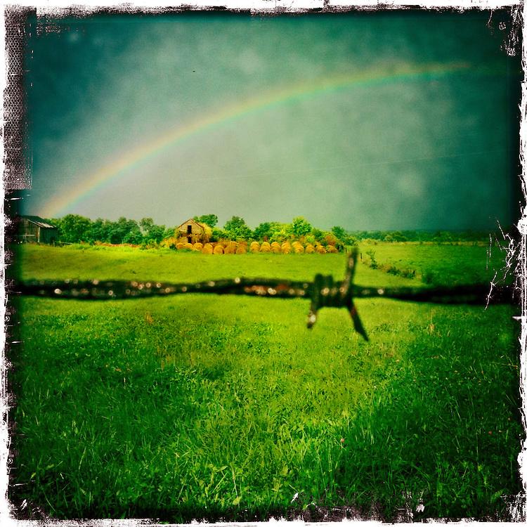 Rainbow Barb Wire, Hay Farm, Berea, Kentucky,