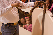 SWEETWATER, TX - MARCH 14: Children watch a western diamondback rattlesnake brought in by hunters during the 51st Annual Sweetwater Texas Rattlesnake Round-Up, March 14, 2009 in Sweetwater, Texas. Approximately 24,000 pounds of rattlesnakes will be collected, milked for venom and the meat served to support charity. (Photo by Richard Ellis)