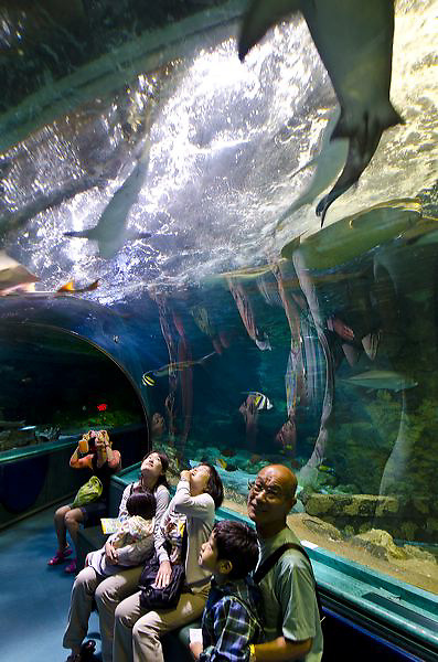 Guam's Underwater World Aquarium, the longest tunnel aquarium in the world.