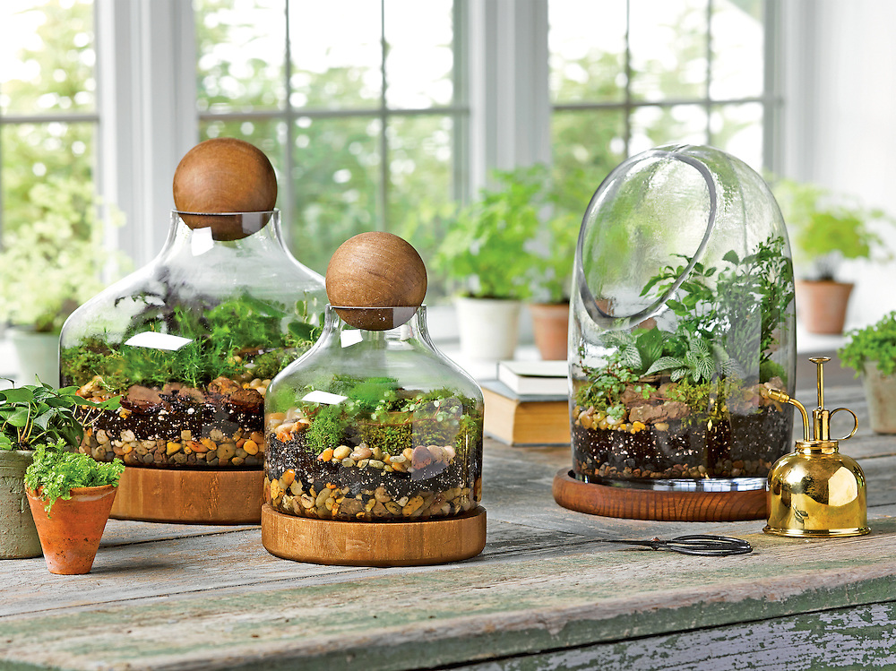 Gardener's Supply Company terrariums