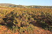 Valley land used for growing grapes near village of Lliber, Marina Alta, Alicante province, Spain