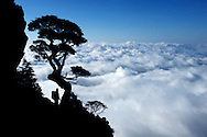 A hiker looks out on a sea of clouds on Taiwan's Holy Ridge, a hiking trail on and around Snow Mountain (Xueshan).