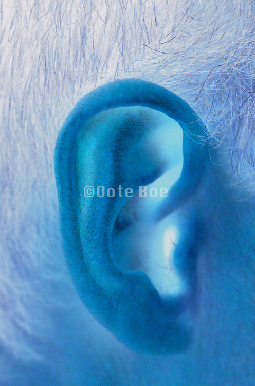 computer manipulation of man?s ear