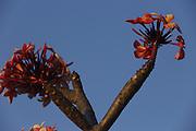 Nova Olinda_CE, Brasil.<br /> <br /> Detalhe de flor da regiao de Nova Olinda, Pernambuco.<br /> <br /> Flower of Nova Olinda region, Pernambuco<br /> <br /> Foto: LEO DRUMOND / NITRO