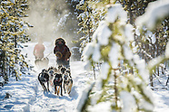 Dogsledding through the sub Arctic of the Yukon Territory of Canada