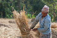 Agriculture in Nepal