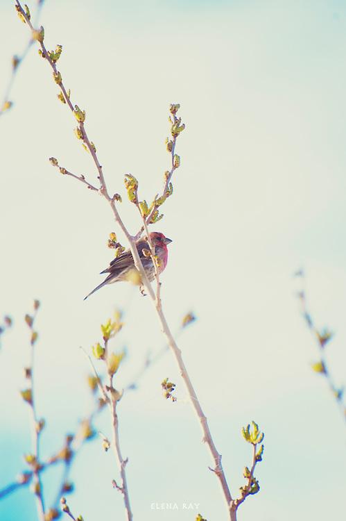 Spare elemental bird on a Spring branch