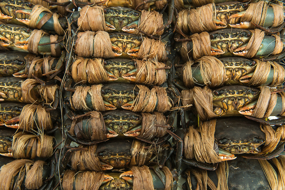 Mud Crabs (Alive)<br /> Suva Sea Food Market<br /> Suva<br /> Viti Levu<br /> Fiji. <br /> South Pacific