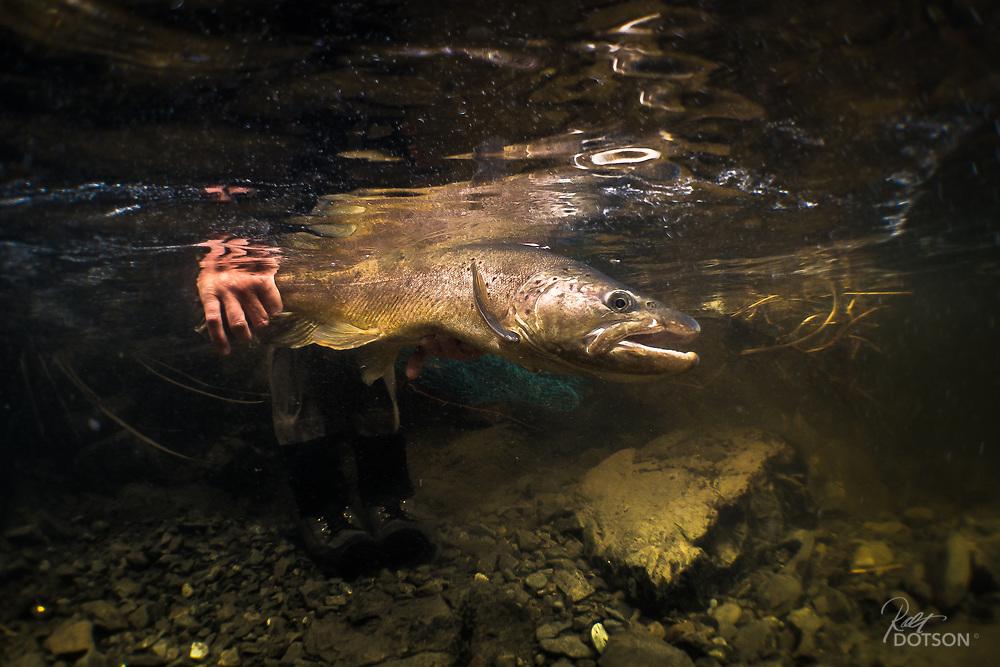 Lewis River, 'Uppa Creek', NZ 2014