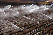 Israel, Negev, watering fields with sprinklers