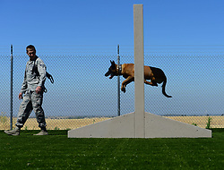 Senior Airman Jarred Uzeta, 9th Security Forces Squadron military working dog handler, commands his MWD Vvladimir to jump through an obstacle June 27, 2018, at Beale Air Force Base, Calif. MWDs are trained to detect either bombs or drugs and play a key role in base security. (U.S. Air Force photo by Airman 1st Class Tristan D. Viglianco)