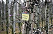 Nederland, The Netherlands, Randwijk, 7-3-2018Op proefpercelen met fruitbomen van de wageningen universiteit worden testen gedaan met verschillende soorten gewasbescherming . Met name die waarbij geen pesticiden gebruikt hoeven te worden .Foto: Flip Franssen