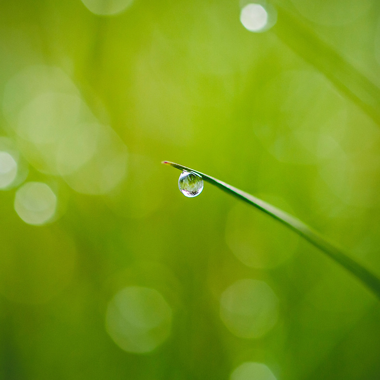 Morning dew on a blade of grass