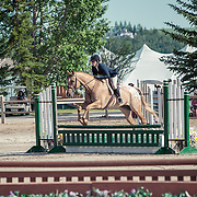 Hunter Spectacular 2'6