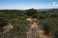 Hiking the trails around the lands of Buena Vista -  a villa built in 1864 by Count Agoston Haraszthy, an immigrant from Hungary who settled in the Sonoma Valley and is known as the Father of California Viticulture.