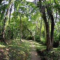 Selva del pueblo de Birongo, ubicado entre las poblaciones de Curiepe y Capaya, en la porción centro-norte de Venezuela. Jimmy Villalta