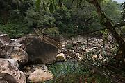 Simtung River Gorge<br /> Home of Living bridges or Root bridges (Ficus elastica)  Renee<br /> Khasi Tribe<br /> Nongriat, Khasi Hills<br /> Meghalaya, ne India<br /> Range: South China, NE India, Burma