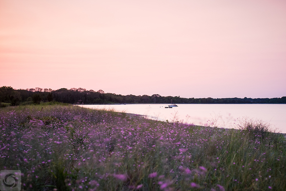 A walk along the thistles on a summer evening in Rhode Island.