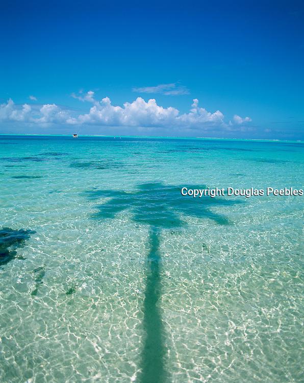 Ocean, Palm, French Polynesia<br />