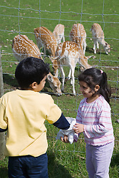 Children looking at reindeer on a visit to a city farm,