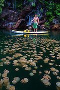 Martin Cavada swims paddles around a lake teaming with jellyfish. <br />