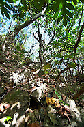 Guam - NHP Limestone Forest
