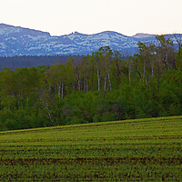 USA, Idaho, Driggs. Landscape and textures of eastern idaho.
